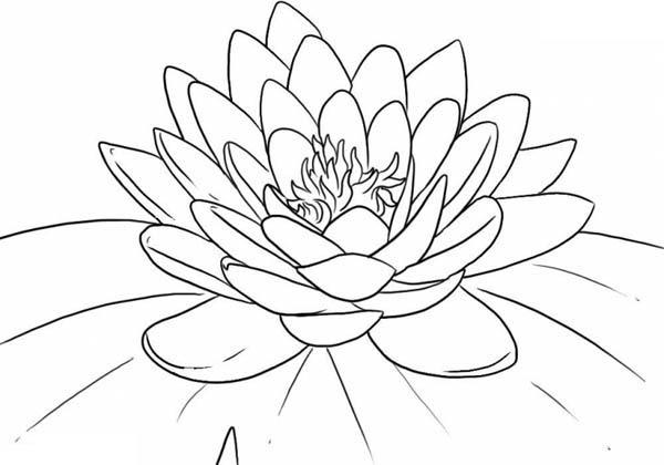Dibujos De Flores Modernas Para Colorear