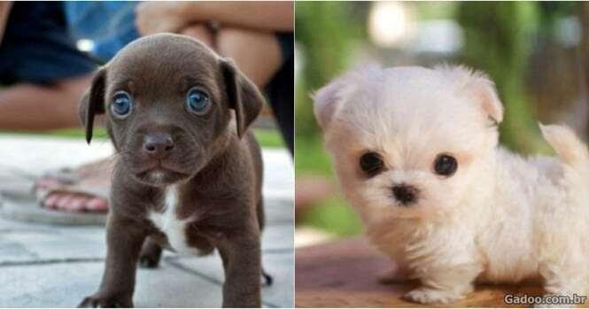 Filhotes mais fofos e encantadores do mundo
