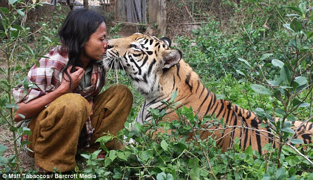 Friends: Mr Sholeh regularly sleeps, plays and fights with the enormous tiger