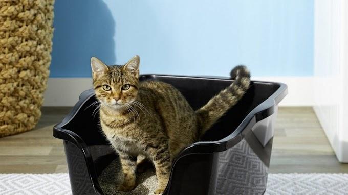 Cómo enseñar a un gato a usar el arenero