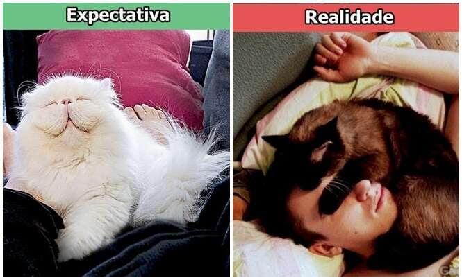 Expectativa x realidade na vida de um dono de gatos