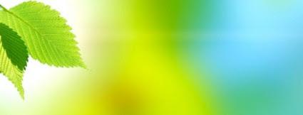 Unduh 64 Koleksi Background Hijau Daun Hd Gratis