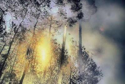 520 mil toneladas a 1,1 milhões de toneladas, devido aos incêndios florestais - Foto mariag/Flickr