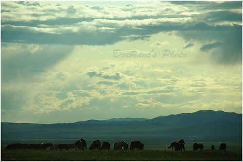 A PHOTO JOURNEY to Mongolia : Posted by Jimsee on www.travellingcamera.com : Hello Bloggers!I'm one of the amateur photographer from Mongolia. This is my first post in this blog, So i wanna share some Mongolian beautiful landscapes. Hope you like it :)Nomadic LifeFlock of HorseGrazing fieldHappy Three Trees (FAMILY)Old houseFreedomXIII century MongoliaFirst stepLast half year i was in India, and I travelled many places, So my next post will be Indian interesting placesThank you guyz!!!: Once upon a Summertime