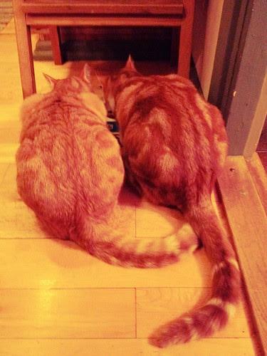 Robin & Rufus