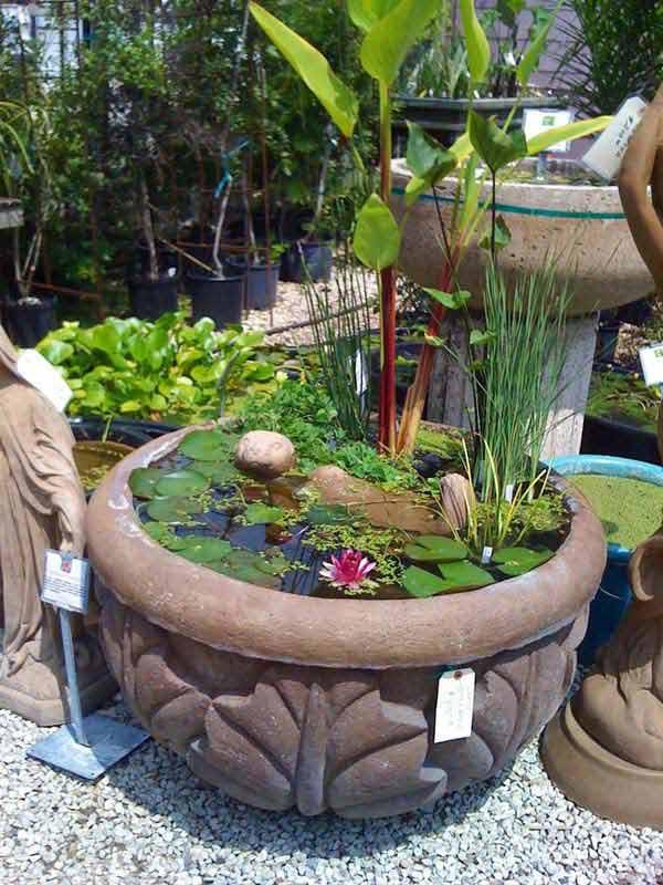 mini-pond-in-a-pot-woohome-20