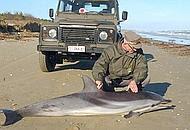 La carcassa del delfino trovata nel Ravennate