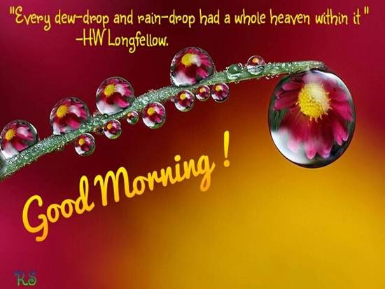 Beautiful Good Morning Wish For You Free Good Morning Ecards 123
