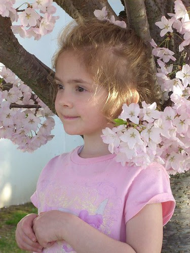 Willow in the Apple Blossoms