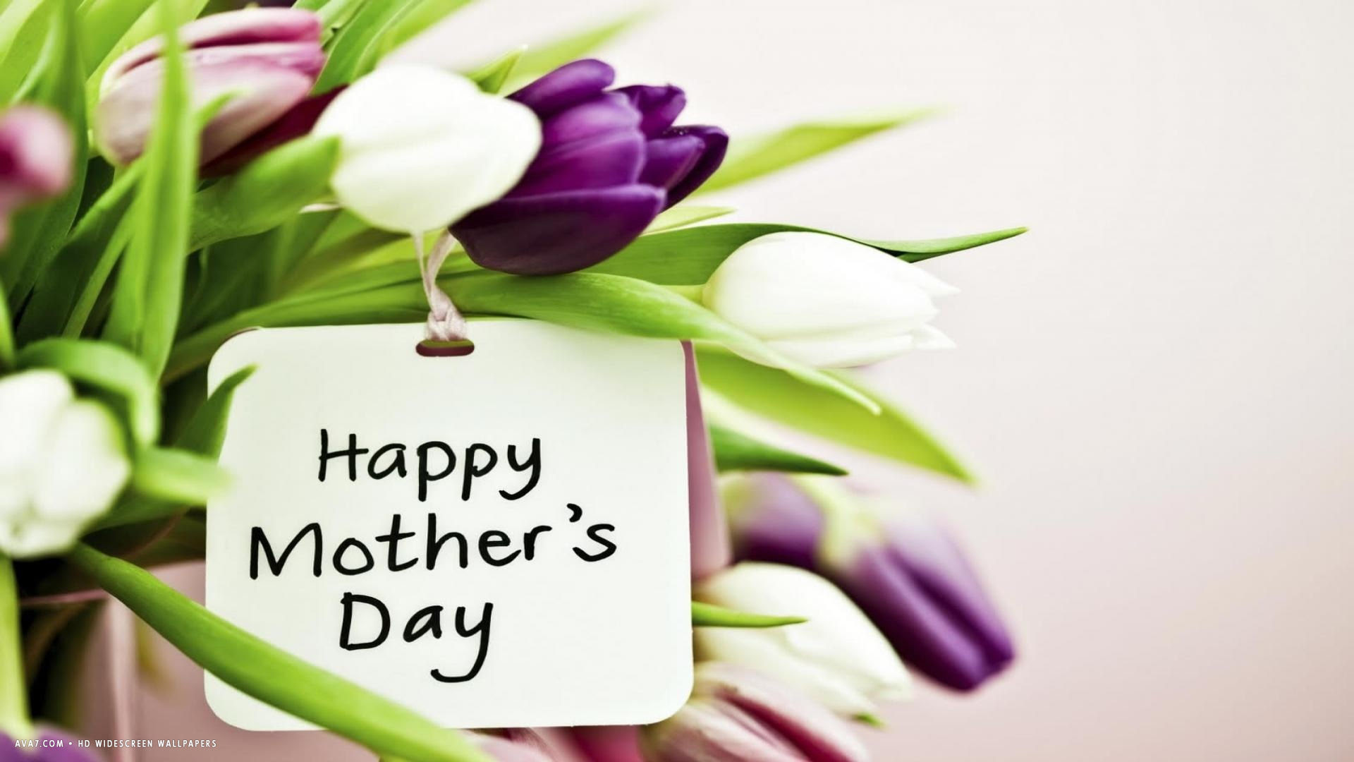 Happy Mothers Day Purple Pink White Tulips Flowers Holiday Hd