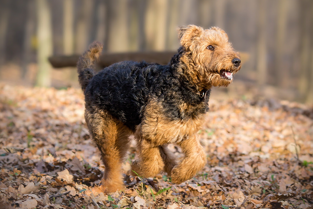 The 15 Best Dog Breeds For Runners  HiConsumption