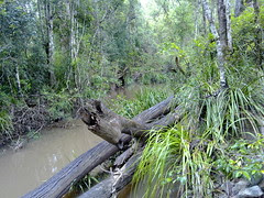 Along the Old North Road: Mosquito Creek