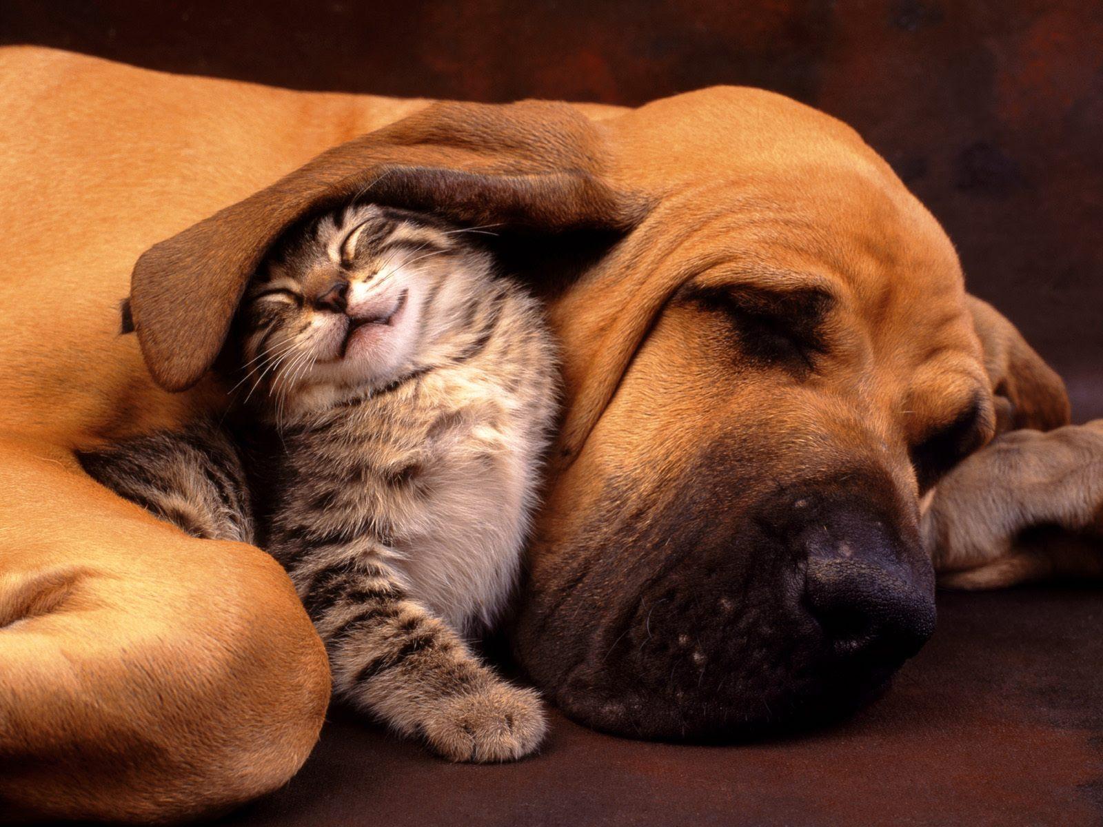 cachorro-gato-amizade-amigos
