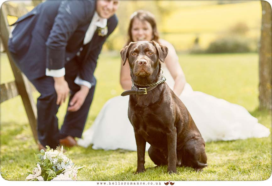 Dog wedding photo - www.helloromance.co.uk