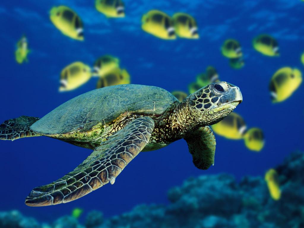 Sea Life Sea Life Wallpaper 32310890 Fanpop