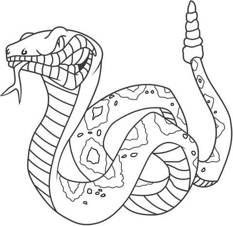 Disegno Di Serpente A Sonagli Arrabbiato Da Colorare Disegni Da
