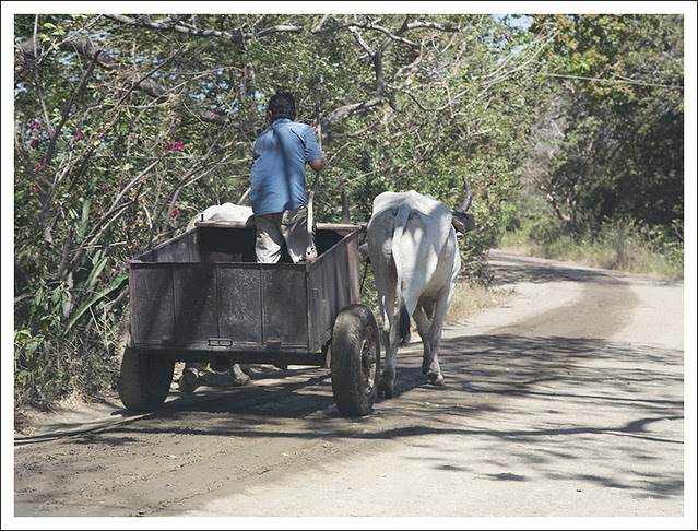 Hauling Sand From The Tempisque River 3