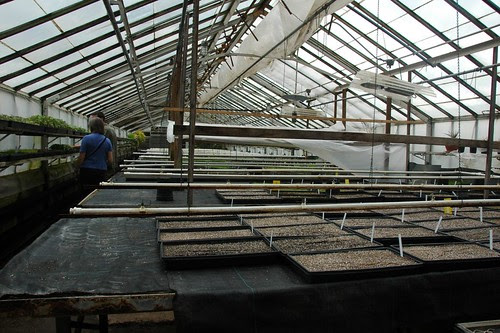 Propagation Greenhouse