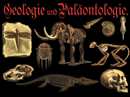 Paleontology PNG Preview