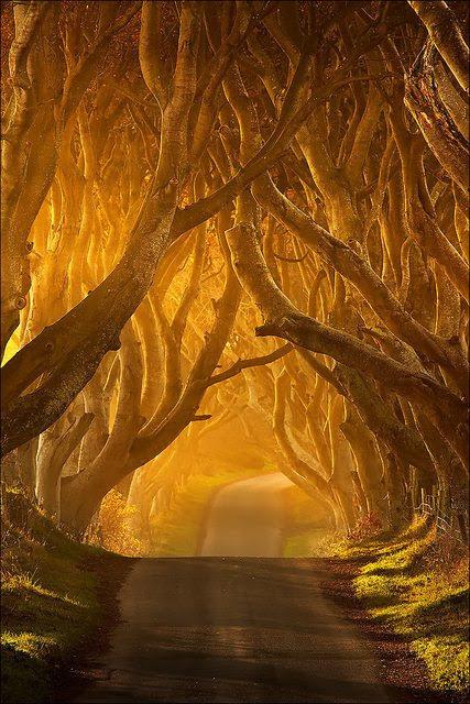 The Dark Hedges in Antrim, Ireland.