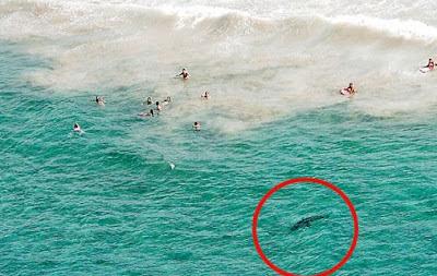surf30_tiburon_australia