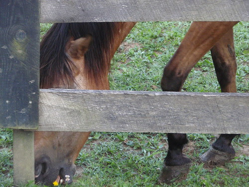 horse and fence (2)
