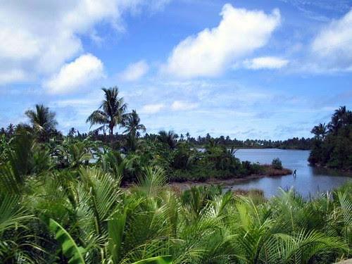 Coastal swamps and nipa palms.