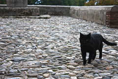 Black cat, La Alhambra, Granada, Spain