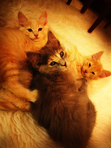 three little kittens...