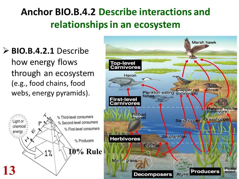 25 Unique Describe Food Chain