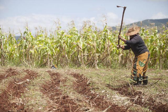 El 2014 apunta un récord histórico en la producción mundial de cereales