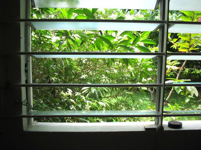 mona window