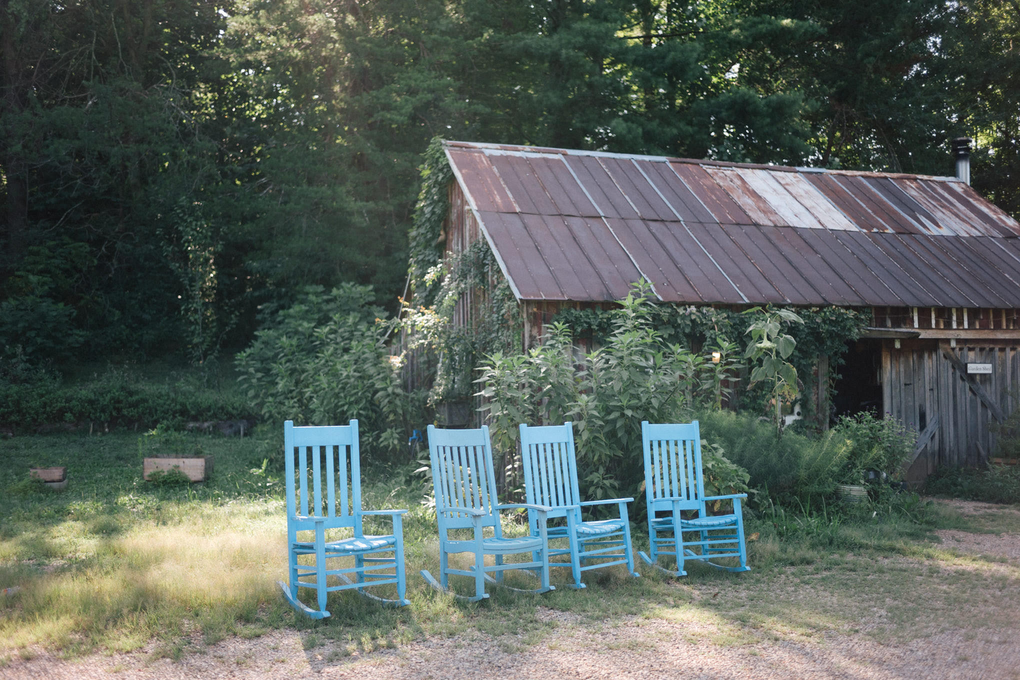 summer blackberry farm