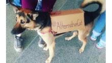 best protest signs moos pkg erin_00004226.jpg