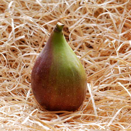 Fig© by Haalo