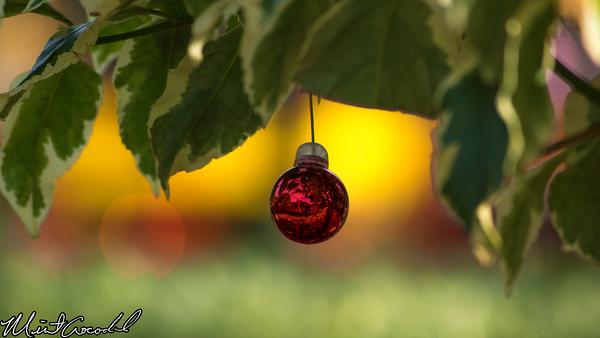 Disneyland Resort, Disneyland, Hub, Christmas, Tree, Ornament