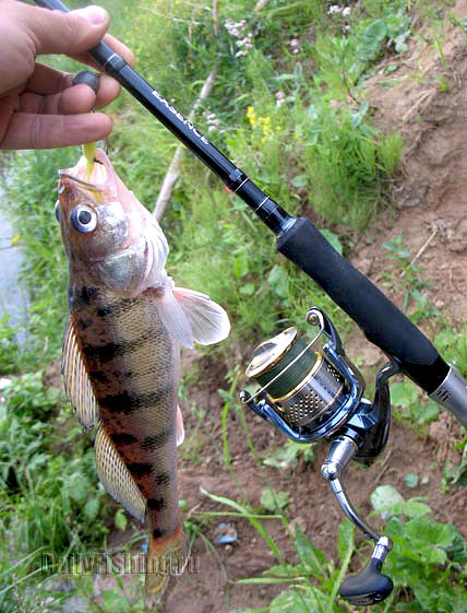 shimano 10 stella in action