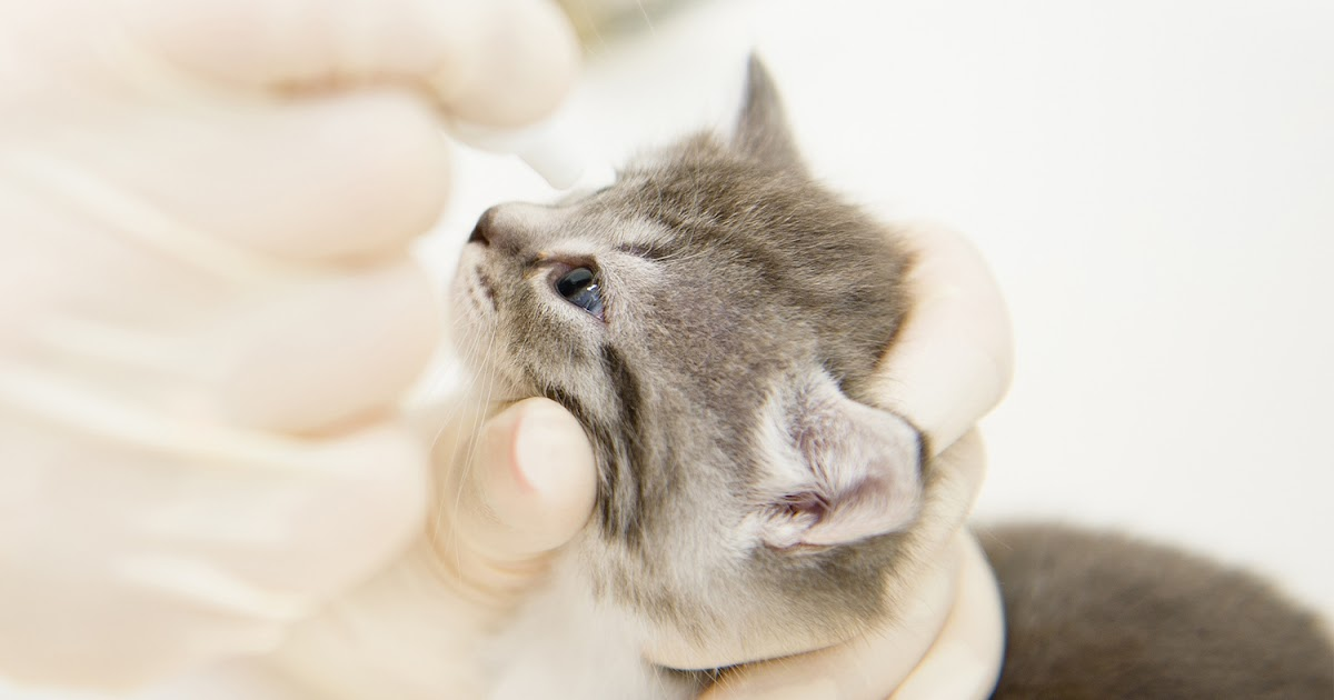 what causes respiratory infections in cats