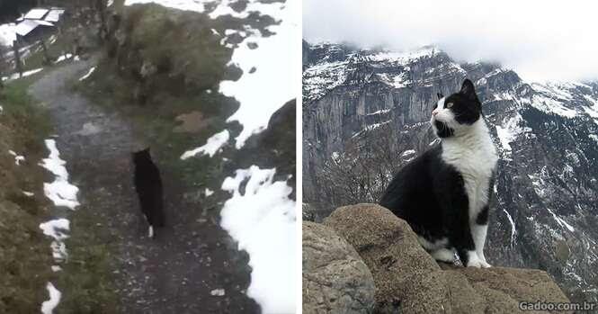 Este gato guiou um homem perdido para escapar de uma montanha na Suíça
