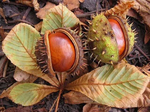 Chestnuts....