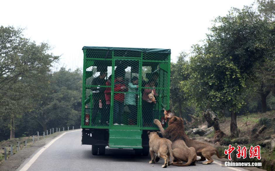 china-zoologico-animales-libres