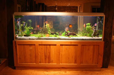 Aquarium Design by Teddy's Tanks