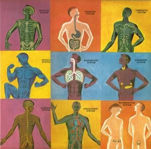 humany body sistem