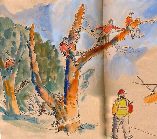 December 2011: Pines