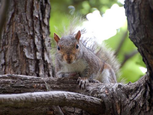 Morningside Squirrel