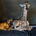 Abandoned baby giraffe in South Africa, whose pics went viral after befriending dog, dies