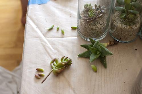 succulent prep