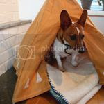 DIY Pet Tipi