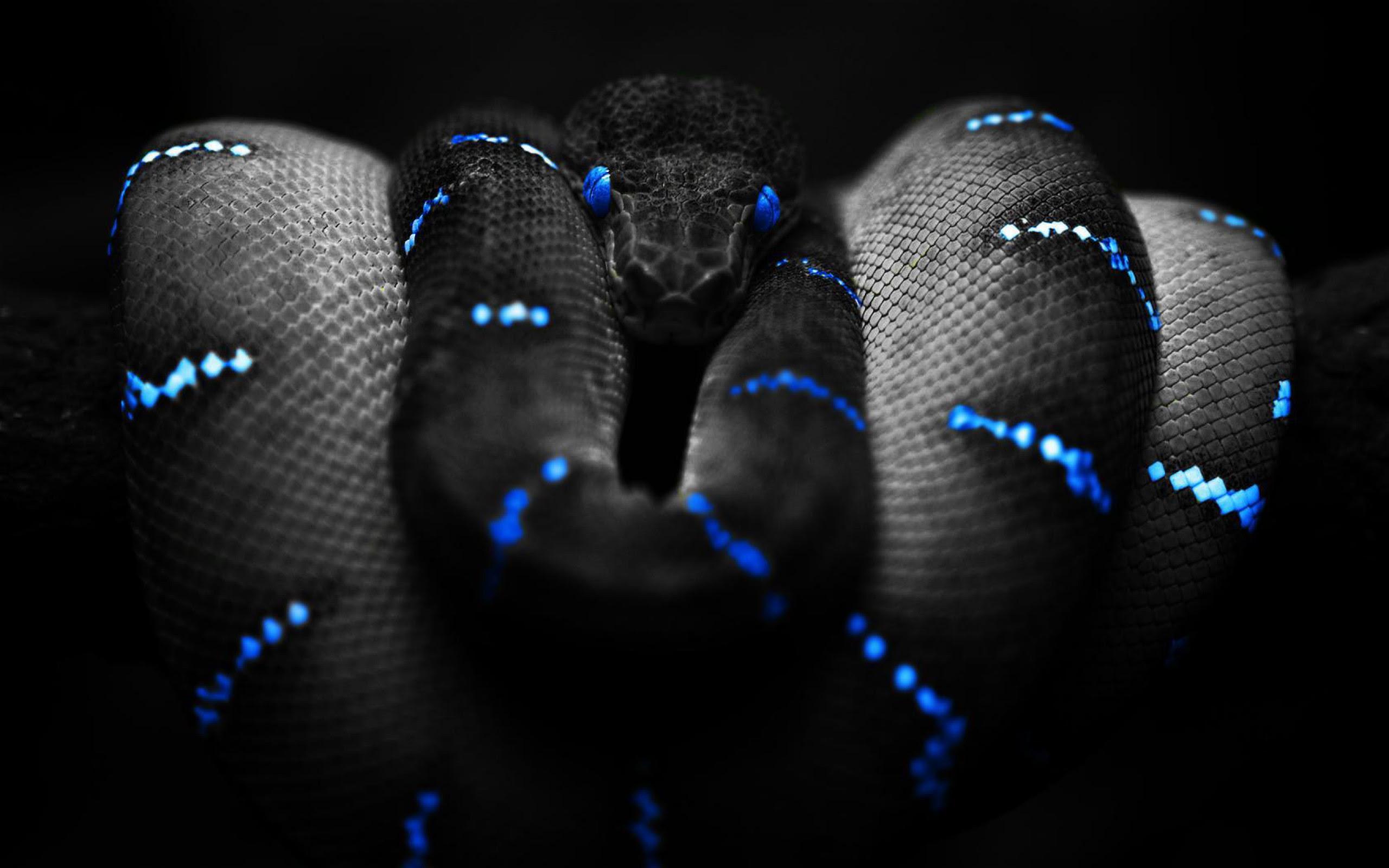 Snake Background Dangerous Black Snake Background 21133