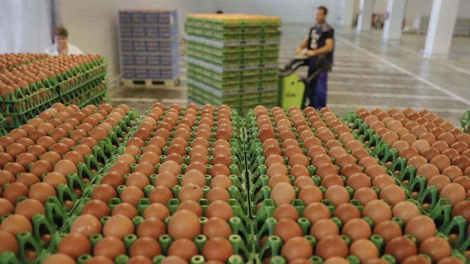 A man transports eggs at a processing plant in Gaesti, southern Romania, Friday. The European Union said Friday that it plans to hold an extraordinary meeting late next month over a growing tainted egg scandal as it revealed that products contaminated with an insecticide have now spread to 17 countries.